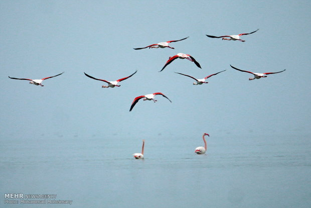 Migratory birds arrive in Iran