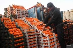 دروازههای کشور به روی واردات میوه باز بود/اجازه  نمیدهیم تولید داخل لطمه ببیند