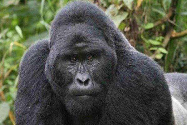 حیوانات دارای قوی ترین آرواره معرفی شدند 1954075