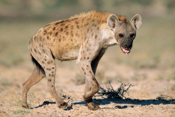 حیوانات دارای قوی ترین آرواره معرفی شدند 1954082