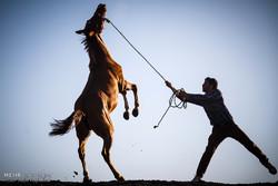 زنگ خطر برای گنج پنهان ایرانی/ ورود اسبهای چینی به بازار ایران!