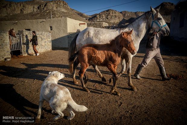 لقطات من الحياة اليومية في ايران رازوجرغلان محافظة خراسان الشمالي