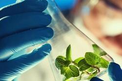 ارتقاء جایگاه پژوهشگاه ملی مهندسی ژنتیک در بین پژوهشگاههای کشور