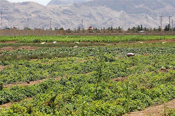 توسعه هزارهکتاری کشت گیاهان دارویی دراستان کرمانشاه تاپایان امسال