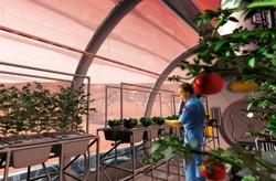 ساکنان مریخ غذای ۷ ساله را می خورند/۲۰۰ غذا در منوی ایستگاه فضایی