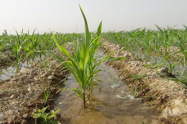 اخطاریه هواشناسی کشاورزی درباره کاهش دما
