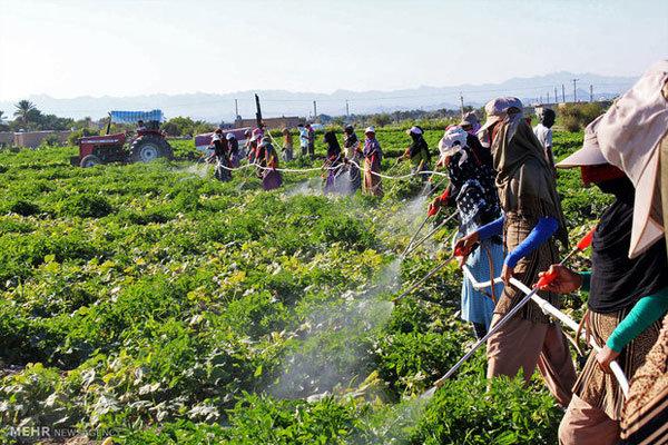 افزایش ۲۴درصدی توزیع کود بین کشاورزان/توزیع ۹۰ هزارتن بذر