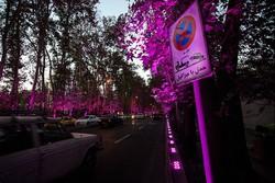 شهرداری احیای درختان خیابان ولی عصر را وظیفه خود میداند