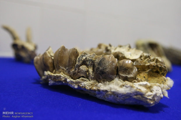 Long gone Iranian fossils unveiled in Tehran