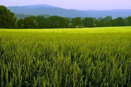 طرح پایش محصولات کشاورزی در استان کرمانشاه انجام میشود