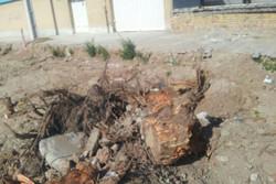 سقوط درخت در خیابان ۱۷ شهریور سنندج خسارت جانی ومالی نداشت