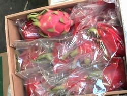 ۳ میلیارد ریال میوه قاچاق در یزد کشف شد