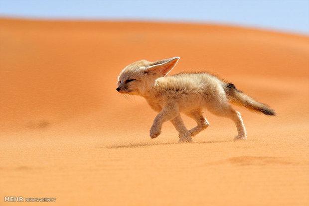 برگزیدگان مسابقه عکس حیات وحش نشنال جغرافیک