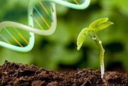 إنتاج 20 عقارا حيويا جديدا على يد العلماء الايرانيين