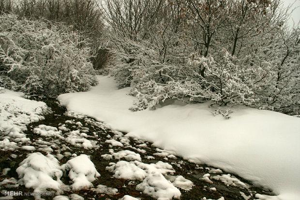 طبیعت زمستانی اردبیل