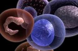 طرح های پژوهشی سلول بنیادی و بانک خون بند ناف حمایت می شوند