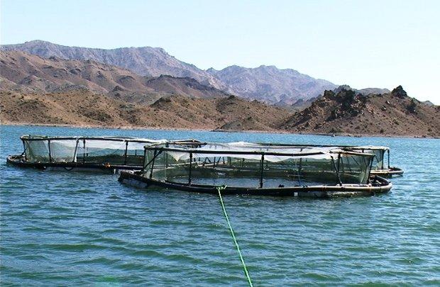 یک هزار تن ماهی با بهره گیری از قفس درچهارمحال و بختیاری تولید شد,