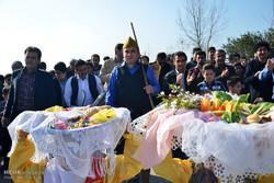 Mazenderan'da Çeltik Tarlası Festivali