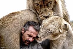 شیروں کے ساتھ زندگی / تصاویر