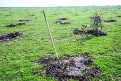 یک هزار هکتار از اراضی کرخه درختکاری میشود