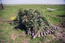 مراسم روز درختکاری در گرگان