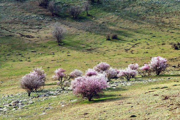 طبیعت رومشگان