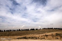 کاشت نهال به یاد 23000 شهید تهرانی