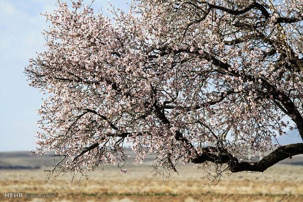 طبیعت بهاری روستای اسطور
