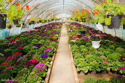 Beautiful greenhouses of spring