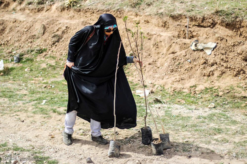 حرکت جهادی شهاب مرادی و شاگردانش برای کاشت درخت در اطراف تهران