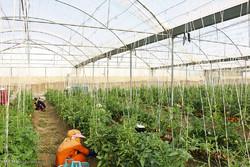 طرح های گلخانه ای باید توجیه اقتصادی داشته باشد
