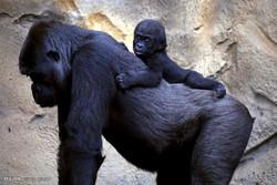 Hayvanlarda Anne-Çocuk Meselesi!