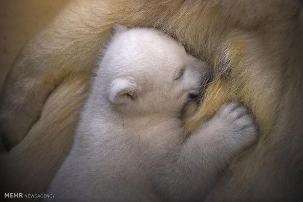 مادران و کودکان در دنیای حیوانات