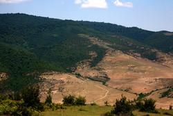 افزایش سیل با از بین رفتن پوشش گیاهی/اهمیت پوشش گیاهی در اقتصاد