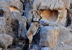 پناهگاه حیات وحش قمیشلو و موته آماده پذیرش گردشگران می شود