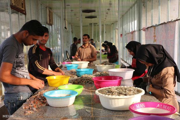 شهرداری خرمشهر برای ساماندهی بازار ماهیفروشان یک هفته مهلت دارد