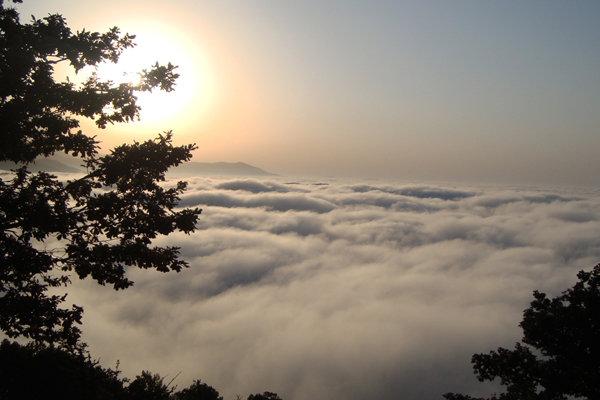 جنگل ابر شاهرود - گردشگری شاهرود