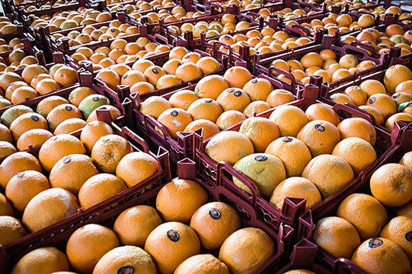 احتمال اختصاص مشوق صادراتی پرتقال/۱۰۰هزار تن ظرفیت صادرات داریم