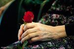 انتشار یک قطعه عاشقانه برای خانواده نجیب ایرانی