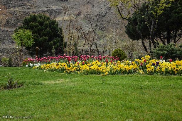 عبور از چهارمین جاده زیبای جهان/در باغ لالهها سلفی بگیرید