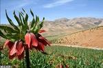 گذری بر دشتی از کمیاب ترین گل های جهان