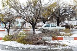 بارش برف ۲۰۰ اصله درخت را در اردبیل از بین برد