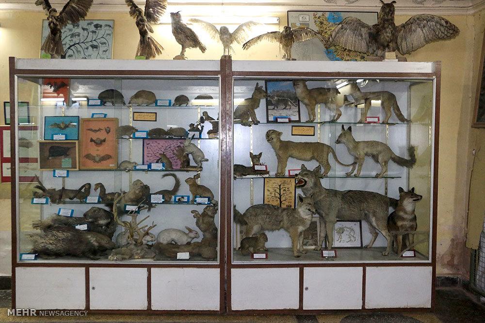 Isfahan Natural History Museum