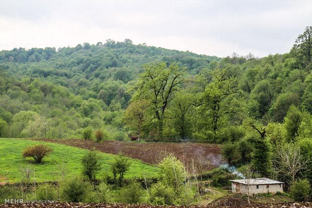 Beautiful spring of Mazandaran