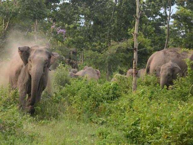 ریاست آسام میں وحشی ہاتھیوں نے حملہ کر کے 5 افراد کو ہلاک کردیا