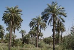 ورود سرمایهگذار به حوزه آبی مینوشهر