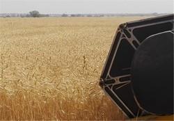۱۰۰هزار تن گندم از کشاورزان سقزی خریداری می شود