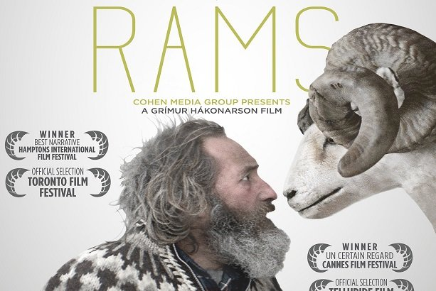 Icelandic film 'Rams' a hit with Iranian audience - Mehr News Agency
