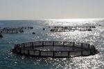 ۲۵میلیارد ریل اعتبارات به مجتمع ماهی پیرانشهر اختصاص یافت