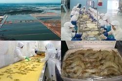صادرات ۵۰تن شاه میگو از دریاچه سد ارس پلدشت